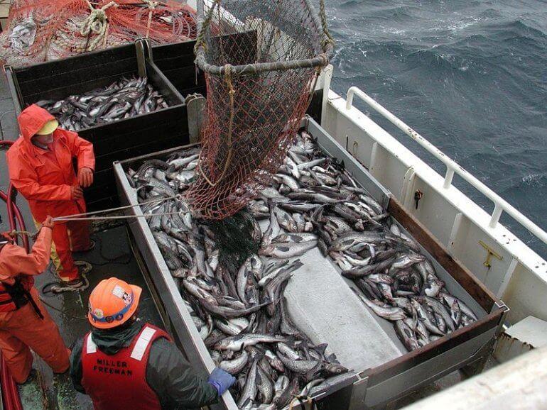 Doodsoorzaak nummer één wereldwijd: de visvangst