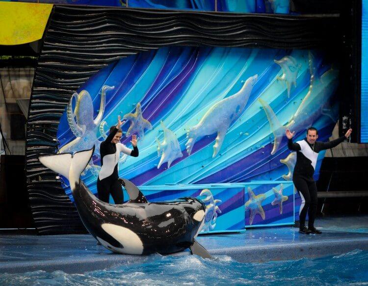 Orka's zijn niet de enige dieren die lijden in SeaWorld