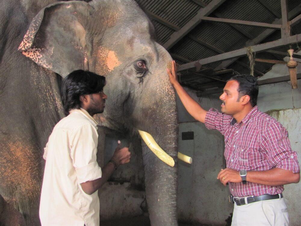 Elephant Sunder Exam