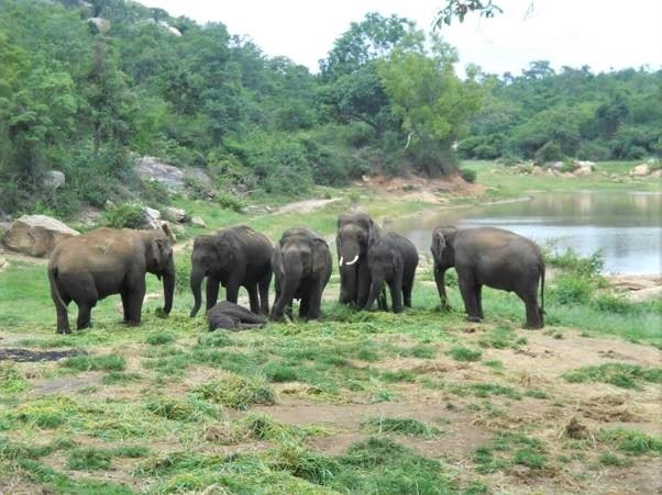 Elephant Sunder with friends in park