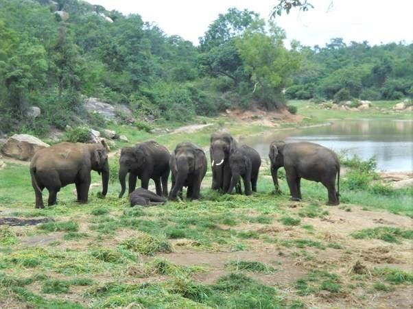 Vier vijf jaar vrijheid voor een gelukkige olifant!