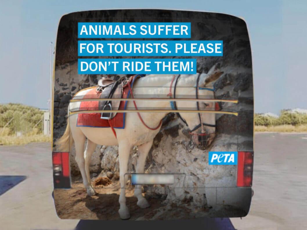 Griekse autoriteiten censureren advertentiecampagne tegen wrede ezelritten