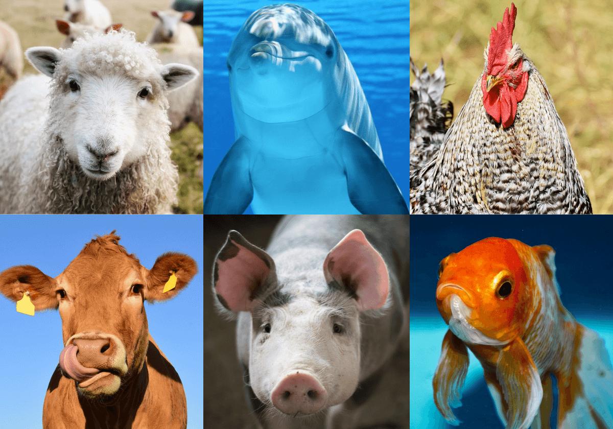 39 afbeeldingen die aantonen dat dieren precies op ons lijken