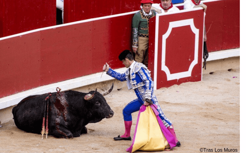 BEKIJK: Activisten stormen de arena binnen om tegen het barbaarse stierengevecht te protesteren