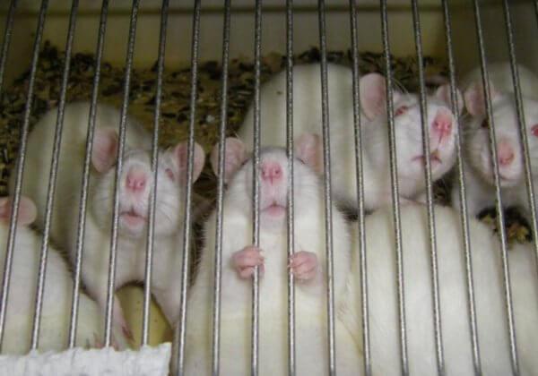 PETA, Cruelty Free Europe, Dove, The Body Shop en meer dan 450 andere verdedigen dierproevenverbod
