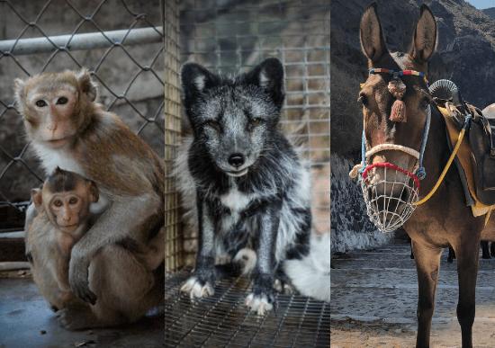 PETA vindt manieren om niet te vertragen omdat dieren NOG STEEDS onze hulp nodig hebben