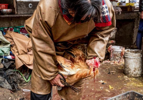 Kom in actie: help dodelijke markten met levende dieren te sluiten in het kielzog van het coronavirus