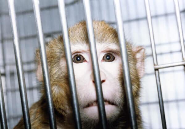 Kom in actie: het is tijd om een strategie te implementeren voor het beëindigen van alle dierproeven