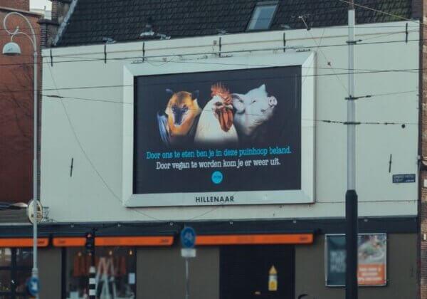 Dieren op PETA-billboard: 'Door ons te eten ben je in deze puinhoop beland'