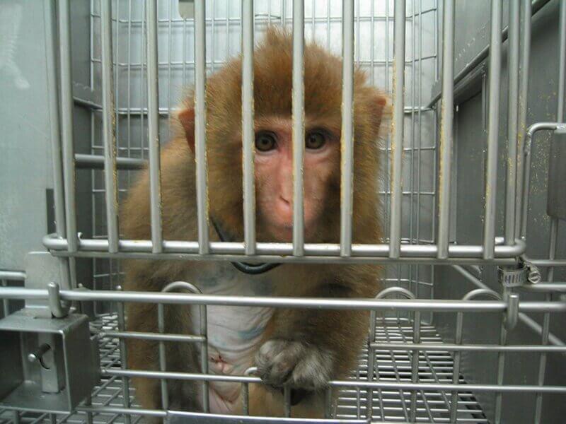 Nog steeds bijna een half miljoen experimenten op dieren in Nederlandse laboratoria