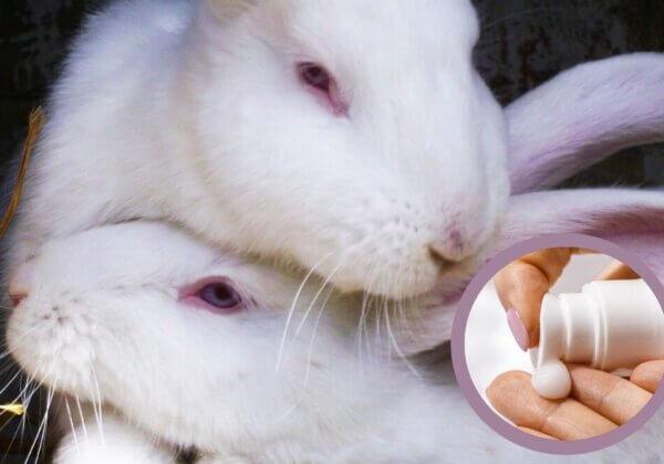 5.500 ratten, konijnen en vissen in de EU ter dood veroordeeld voor zonnebrandcrème