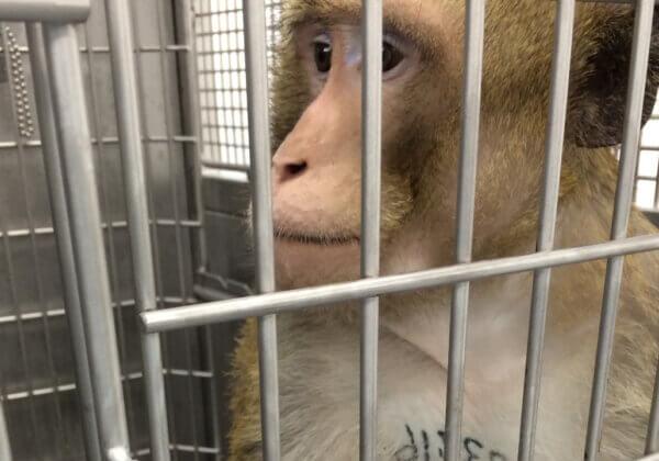 De Nederlandse regering heeft beloften verbroken en geen vooruitgang geboekt bij het uitfaseren van dierproeven